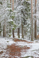 Beautiful serene winter forest landscape
