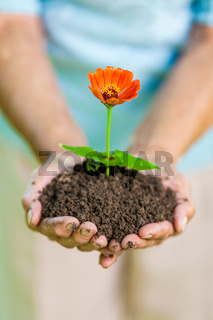 Gardening concept. Old woman holding a new plant in her hands