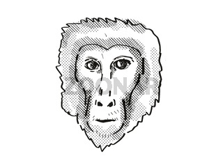 Assam Macaque Monkey Cartoon Retro Drawing