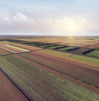 aerial view of colorful farm fields