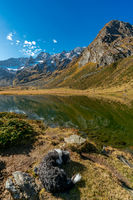 Panoramic view of the alpine Seebersee lake with the high rising mountains of the Texelgruppe in the background