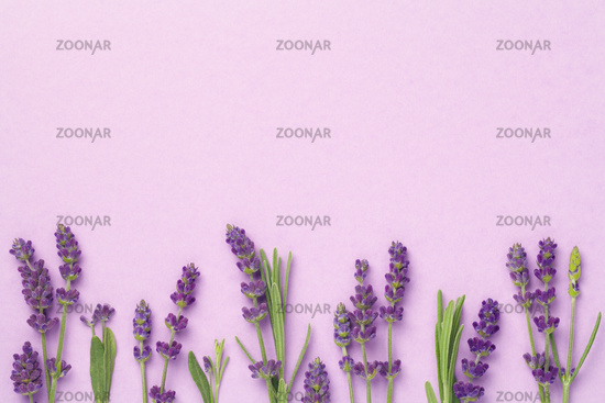 Lavender Flowers On Pink Background