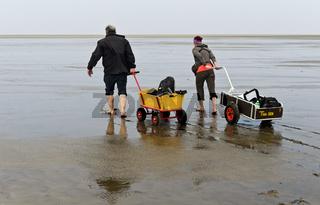 Wanderer im Watt ziehen Bollerwagen mit Strandgepäck über die Wattfläche,Wattenmeer, Westerhever