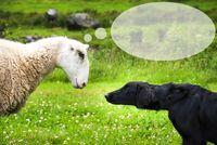 Dog Meets Sheep, Speech Balloon, Copy Space