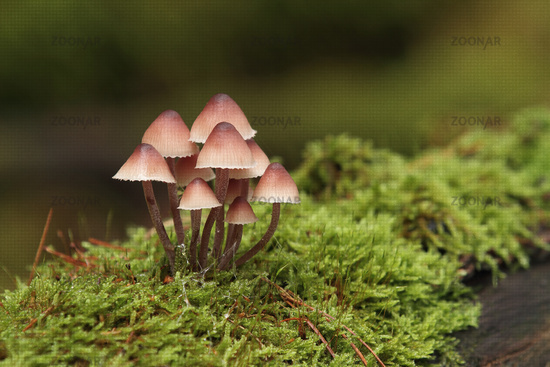 Mushrooms in moss