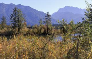 Schilfgürtel am See, Oberbayern, September