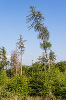 Forest damage and afforestation