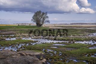 Sumpflandschaft auf der Insel Ummanz