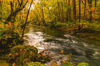 Scenic view of beautiful Oirase River flow in the forest of colorful foliage in autumn season
