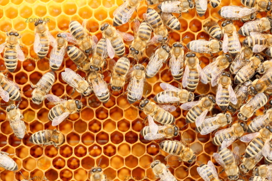 many working honey bees