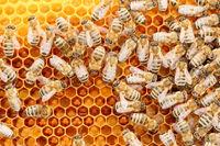 many working honey bees