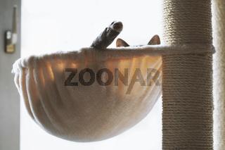 cat lounging in hammock on cat tree