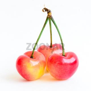 Studio shot three joined stem Rainier cherries isolated on white
