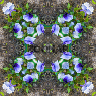 Square - pattern, kaleidoscope of photos of blue flowers growing in a flowerbed