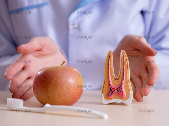 Dentist practicing work on tooth model