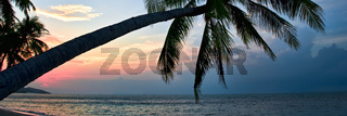 Silhouette of palm tree lush foliage leaning over beach during idyllic bright colourful sunset, tranquil water of Siam gulf on Samui island horizontal image cropped background, Asia, Thailand