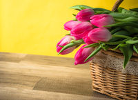 Beautiful bouquet of pink tulips in a wicker basket