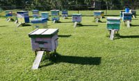 Hives on grass