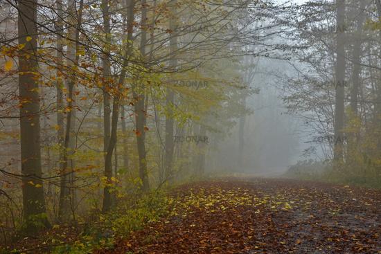 Autumn forest with November fog