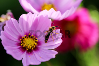 eine wunderschöne lila Blüte