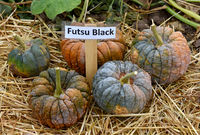 Futsu Black, Kuerbis, Speisekuerbis