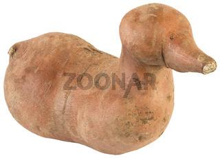 Ipomoea Batatas Cutout