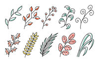 collection forest fern art foliage natural leaves herbs in line style. Decorative beauty elegant illustration for design Vector flower