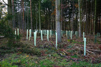 Reforestation after precipitation of the spruces damaged by the bark beetle,