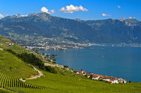 Postcard landscape with vineyards at Lake Geneva, Rivaz, Lavaux, Vaud, Switzerland