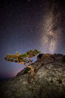 A lone tree on the rock and Milky Way above it