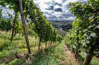 vineyards in the Eifel