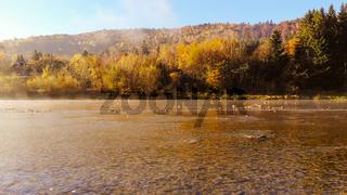 Mountain River in Carpathians, Ukraine. Golden autumn, morning time