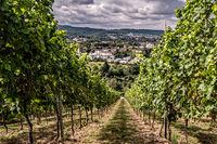 vineyards in the Eifel near Trier
