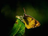 Butterfly by sunrise