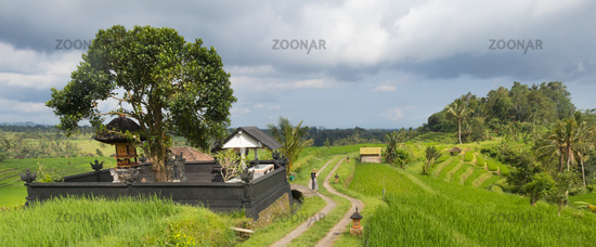 Female tourist walking a path among Jatiluwih rice terraces and plantation in Bali, Indonesia.