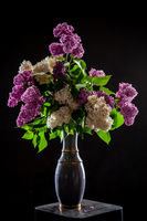 Lilac in vase on the black background