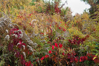 autumn meadow with yellow and red plants