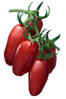 Cluster of San Marzano paste tomatoes, paths