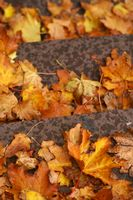 Autumn leaves on the steps