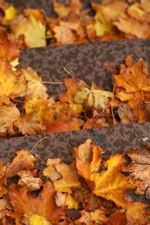 Herbstblätter auf den Treppenstufen