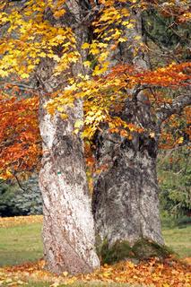 Bäume im Moorgebiet im Slavkovský les