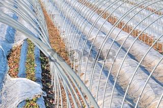 Schutz der Erdbeeren vor Frost