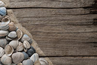 texture, background, frame - sea shells and sand with copy space