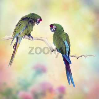 Greenl Macaw Parrots Perching On A Branch