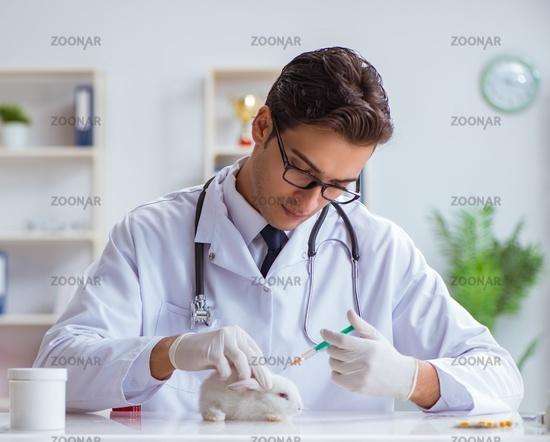 Vet doctor examining rabbit in pet hospital