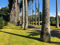 Palm tree alley in Royal Botanic King Gardens, Kandy, Sri Lanka.