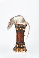 Rat And Drum