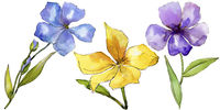 Watercolor colorful flax flowers. Floral botanical flower. Isolated illustration element.