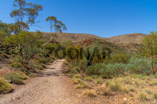 in the Australian outback a sandy path leads to the horizon