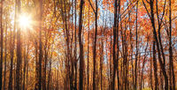 Sunlight Rays sunshine autumn natural background trees